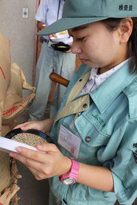三原・いち早く米の検査始まる。