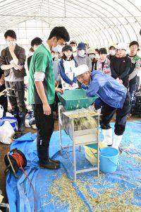 広島市・広島菜の系統を守る採種を新入職員が体験1